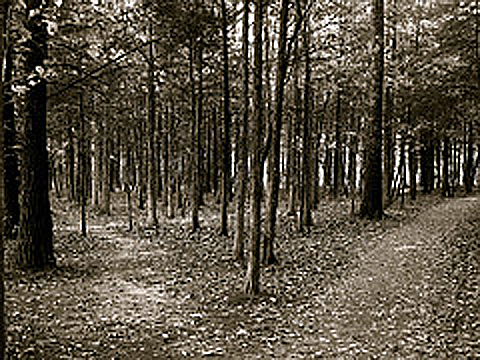 woodedpath